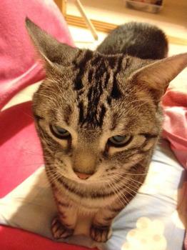 20120323猫たん.jpg