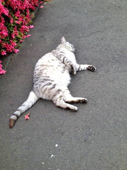 20120530猫.jpg