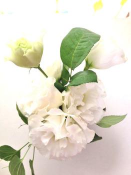 20120609花4.jpg