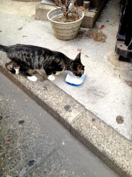 20120912猫の足袋.jpg