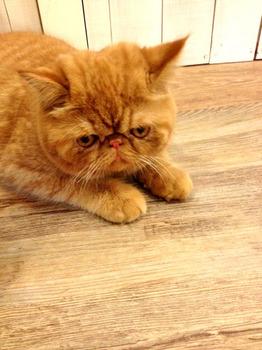 20130209猫1.jpg