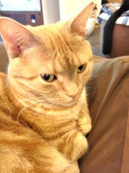 20130209猫5.jpg